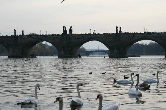 Charles Bridge: Карлов мост, а за ним еще мосты