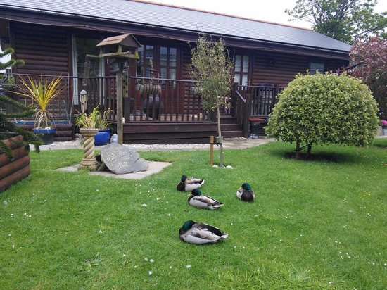 Riverside Holiday Park: The ducks are REAL!!! I couldn't believe!!!