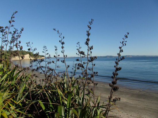 Army Bay Beach : View through flaxes