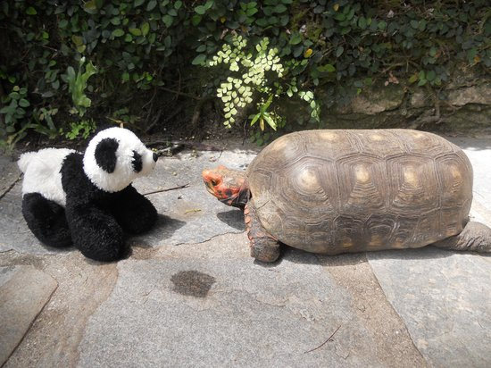 O Veleiro Bed and Breakfast : Panda meets the manager