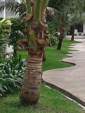 The Natural Resort: Территория отеля