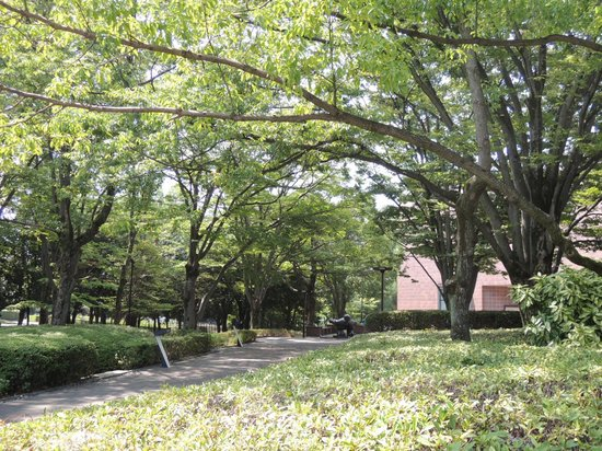 Yamanashi Prefectural Museum of Art: 緑の多い公園内の美術館です