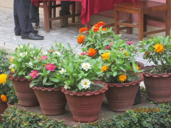 Acme Guest House: flowers