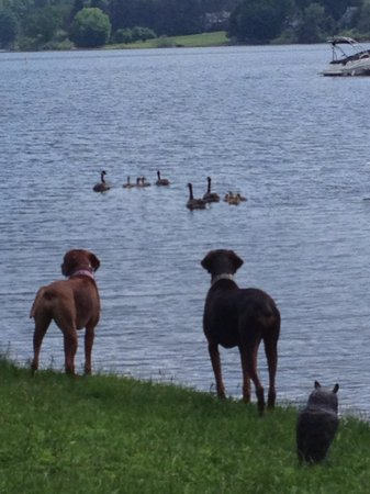LakeStar Lodge: Our boys enjoying the lake