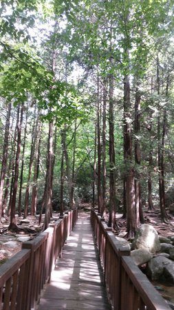 Beomeosa-Tempel: 幽靜山林