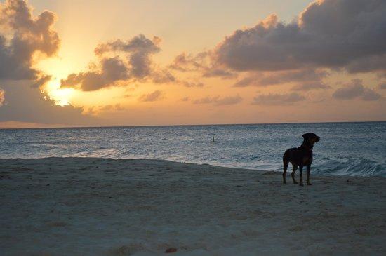 Eagle Beach: A pup's sunset.