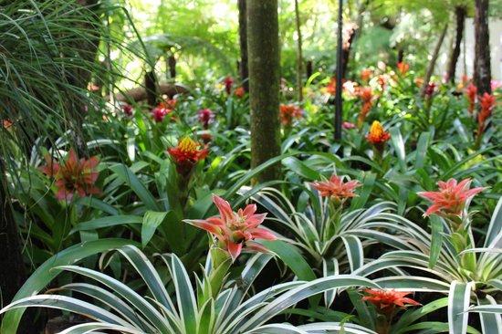 Parque das aves picture of parque das aves foz do for Plantas ornamentales para parques