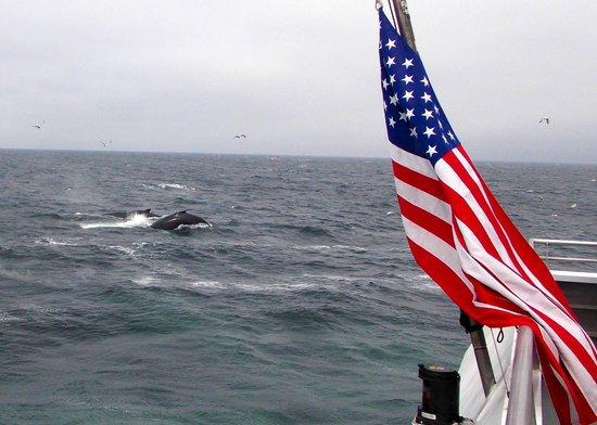 Boston Harbor Cruises : Whale watch