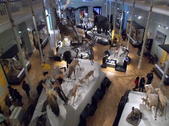 Museo Nacional de Escocia: Natural history exhibit (X3 floors)