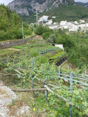 Villa Maria Bed and Breakfast: Along the walk down to Amalfi
