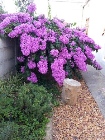 Wheatlands Lodge : Garden