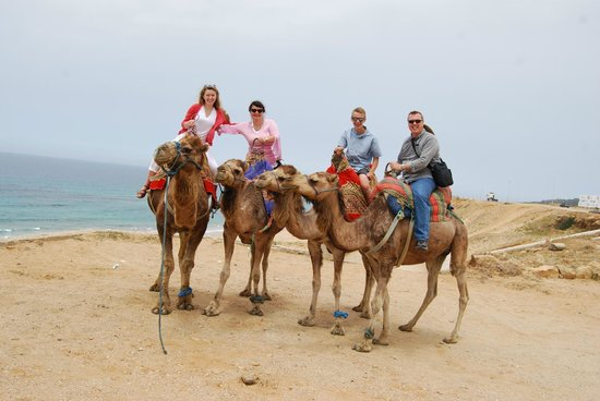 Said Private Day Tours : Edwards Family Camel Ride