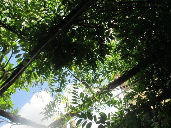 Il Giardiniello: 緑が美しい!
