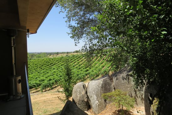 Wise Villa Winery: About 20 acres of vines