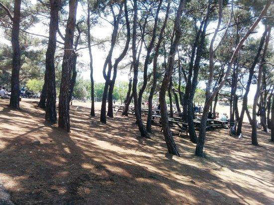 Хейбелиада, Турция: piknik alanı