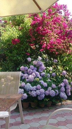 Hotel Shanker: gardens