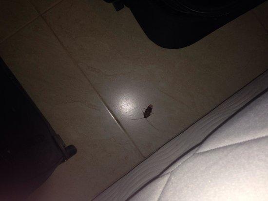 LABRANDA Aqua Fun Marrakech: Biggest cockroach seen in my life ! Between the beds :(