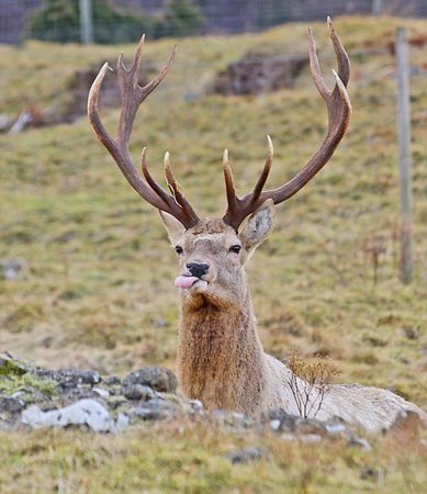 Cairn Hotel : ONE OF MORE HANDSOME LOCALS
