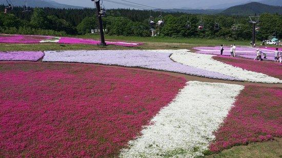 Kurohime Highland: 2014年6月1日