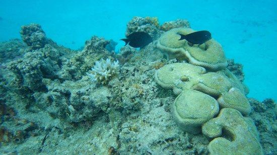 Aitutaki Adventures: Snorkeling in Aitutaki lagoon with Aitutaki Adventure