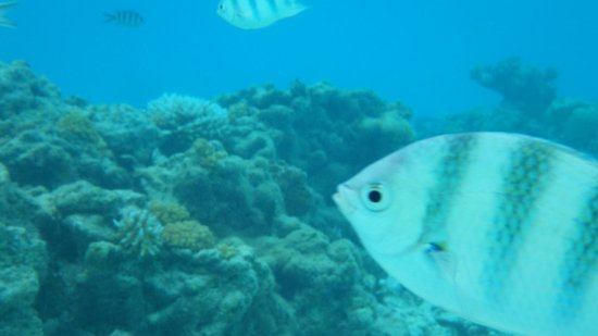 Aitutaki Adventures: A selfie of a fish (with Aitutaki Adventure)