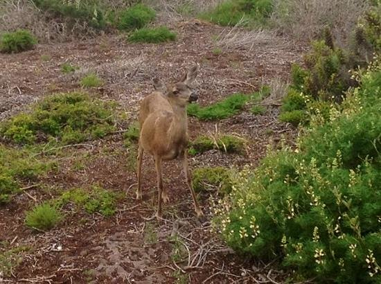 Monterey Peninsula Inn: You will find these happy deer all around the Sea Breeze. We found this one 4 blocks down at the