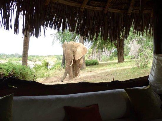 Galdessa Camp: the 'house elephant'