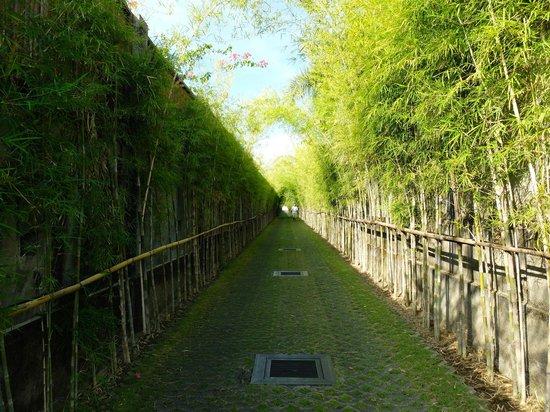 Serene Villas' picturesque laneway