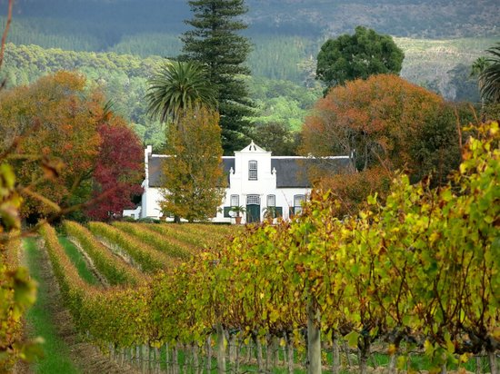 Greatest Africa Private Wine Day Tours : Typical Estate