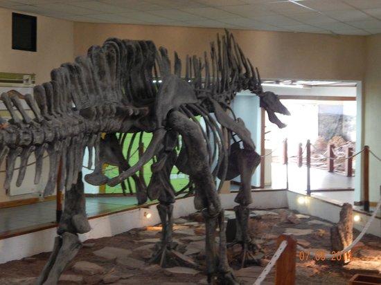Villa El Chocon, Argentina: Restos de dinosaurios -Museo Municipal Ernesto Bachmann