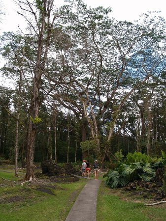 Lava Tree State Park : Easy, walkable path