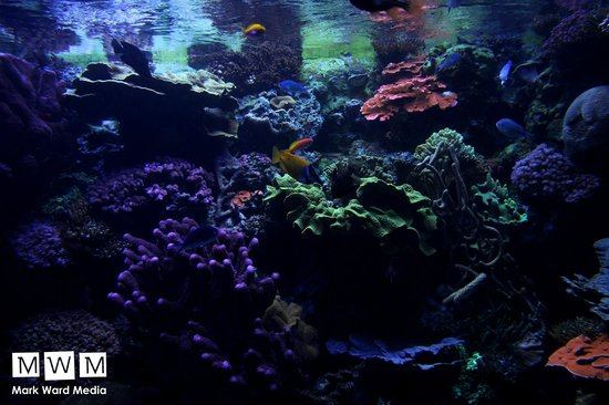 Coral Reef Picture Of Aquarium Of The Pacific Long