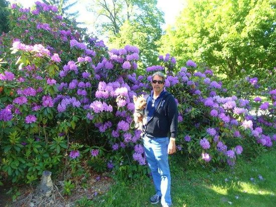Vanderbilt Mansion National Historic Site: some of the beautiful flowers and our dog enjoying the park