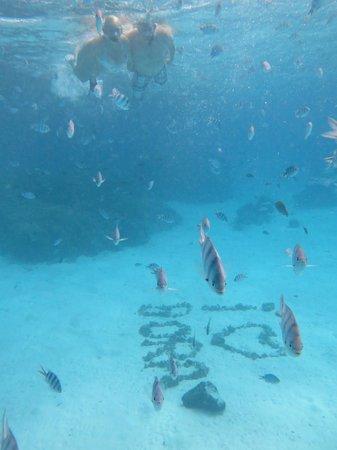 Bora Bora Photo Lagoon : underwater - he took so many!!