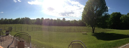 Shelburne Vineyard: Beautiful vineyard