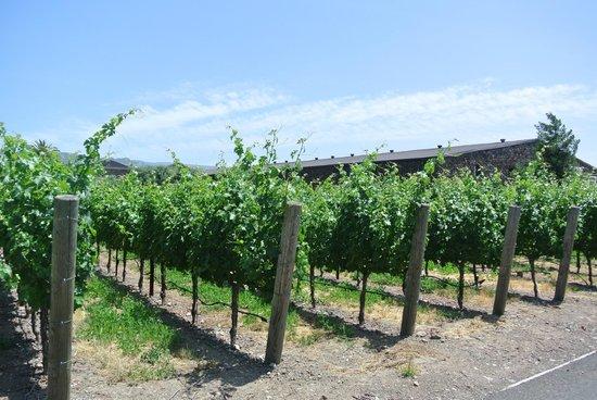 Black Stallion Winery: Una vista del exterior