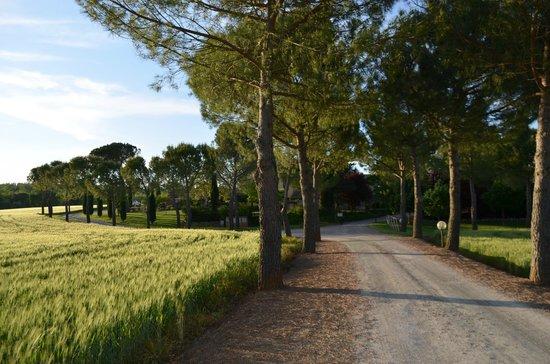 Agriturismo Nerbona: Il viale d'ingresso alla struttura