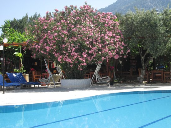 Gokcen Hotel & Apartments : my fav tree by the pool