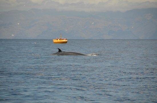 Abeque Turismo Activo : Baleine / Whale, Masca Bay, Los Gigantes