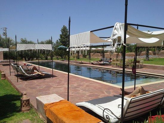 Jnane Allia : la piscine 20 x 4 ml