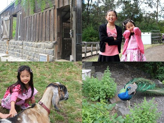 Collingwood Children's Farm: The faces say it all