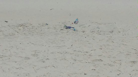 Beach at Panama City: PCB.... So disappointed this year!  Came down to a mess like this every day on the beach!!!! Bea