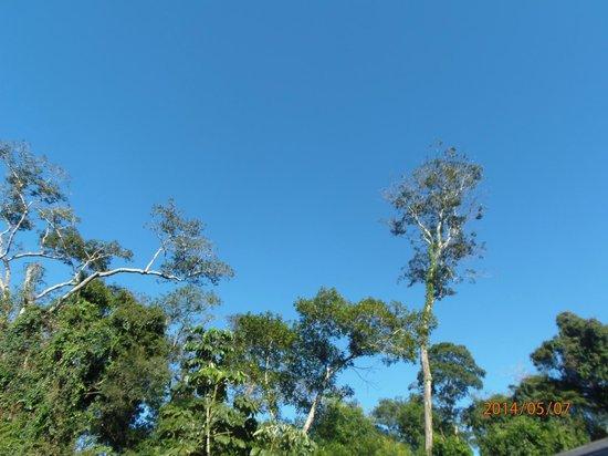 La Cantera Jungle Lodge: Selva y cielo.