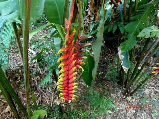 La Cantera Jungle Lodge: Flores