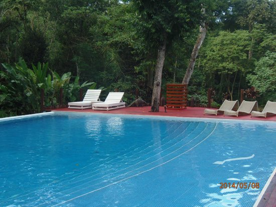 La Cantera Jungle Lodge: Pileta
