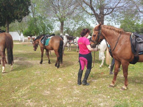 Hacienda Horses: Picnic