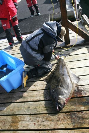 The West Coast Fishing Club - The Clubhouse : Hali getting ready for weigh in