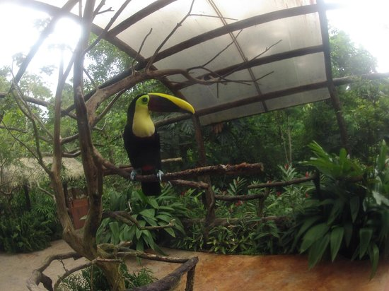 The Springs Resort and Spa: toucans