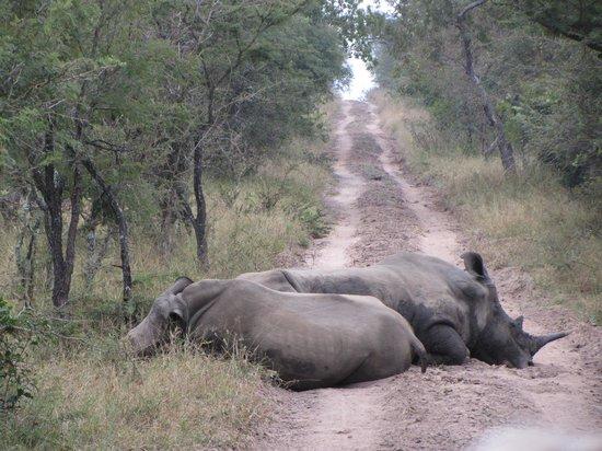 Kapama River Lodge: Rhinos in road