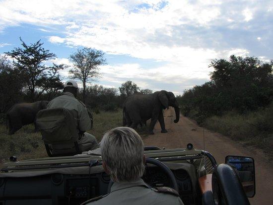 Kapama River Lodge: Moshe (tracker), Anen (ranger) and elephant